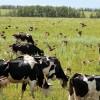 За грубые нарушения ветеринарного законодательства оштрафована молочная ферма в Малоархангельском районе