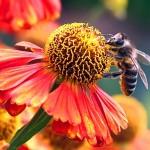 Возбуждено второе уголовное дело по факту массовой гибели пчел