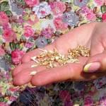 «Орелагроинвест» нарушил требования Технического регламента при хранении и реализации зерна